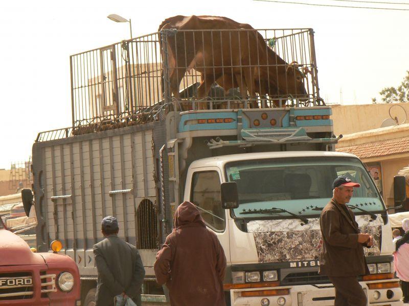 marocmotooct2008179.jpg