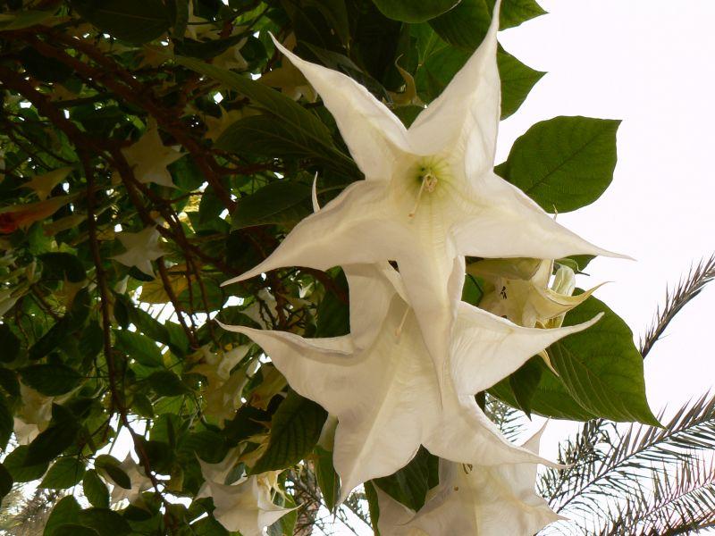 marocmotooct2008821.jpg